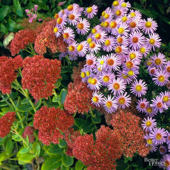 flori toamna