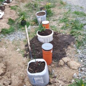 Zona va fi alcătuită din plante perene, flori și arbuști. Deocamdată ceva busuioc și lavandă (abea răsărite), precum și alte câteva plante, încă nerăsărite. Din cauza substratului total necorespunzător (argilă galbenă) am plantat deocamdată în recipiente de plastic, urmând să nivelez spațiul cu pământ de umplutură.