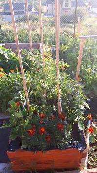 Patul înălțat are cumva un rol decorativ: unica roșie este înconjurată de flori. Acum, începe să arate cum mi-am dorit inițial