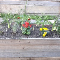 Flori și iarăși flori: salvie, crăițe, gazania (ofilită, din păcate), dalii, ochiul boului, arpagic, cam de toate pentru toți.